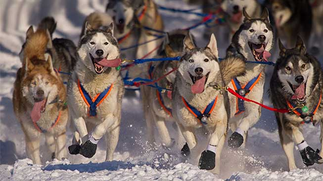 Iditarod Race